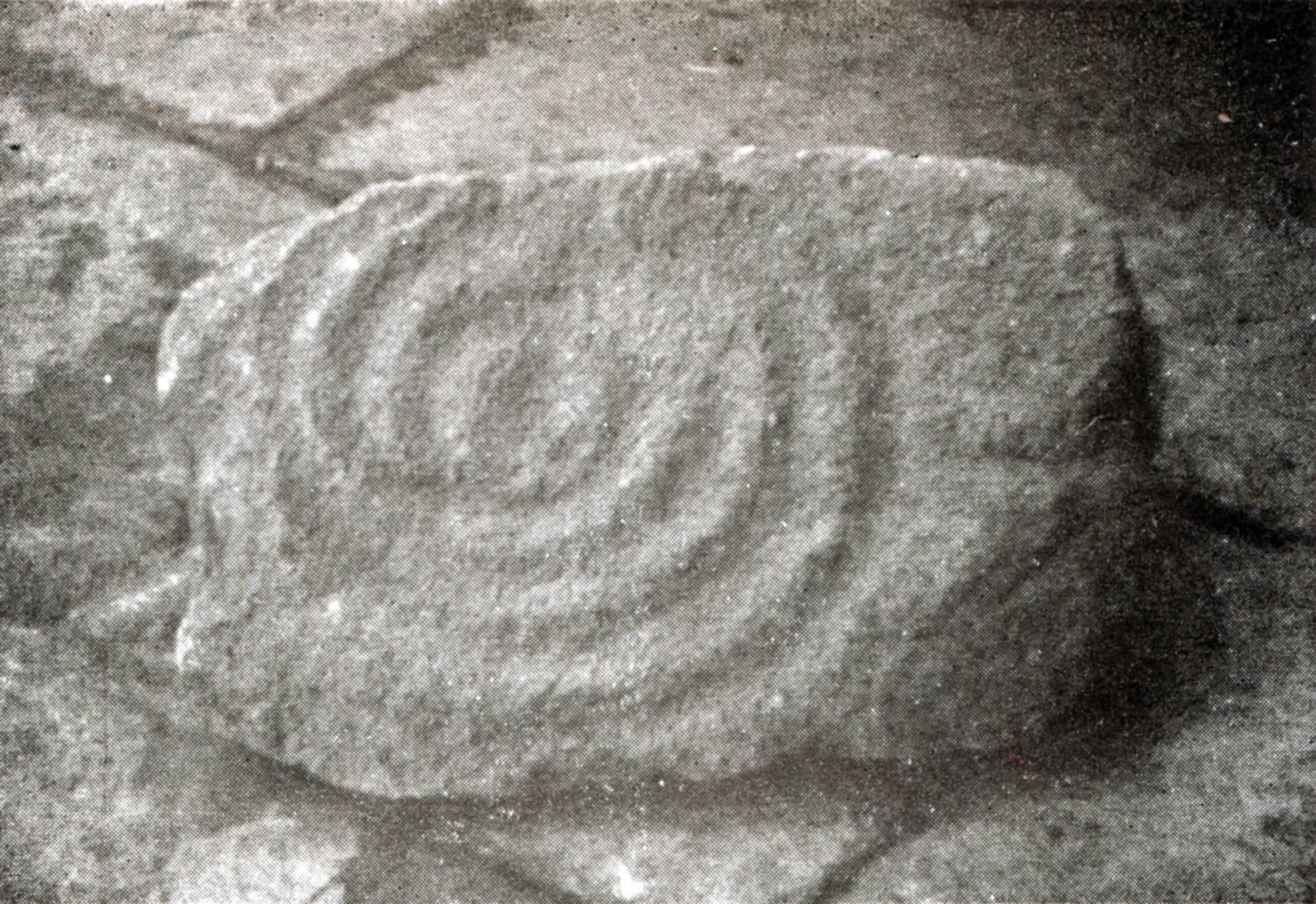 Petroglifo de Castro Lupario. Foto de Fernando Acuña Castroviejo 1971.